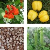 Heritage Seed Library list 2020 is open!