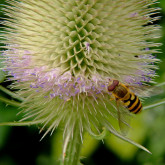 insect decline organic
