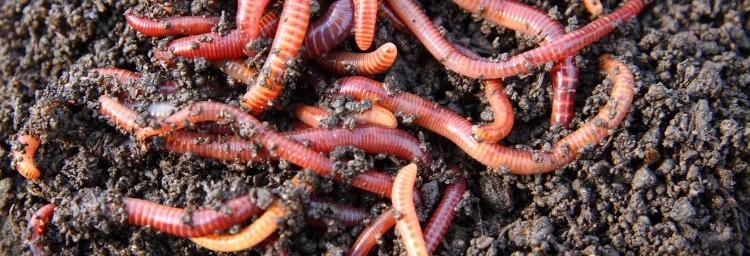 Farmland worm survey reveals worrying results