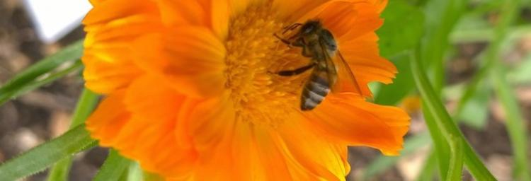 National Pollinator Strategy