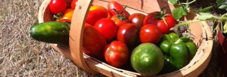 Nutritional differences in organic food