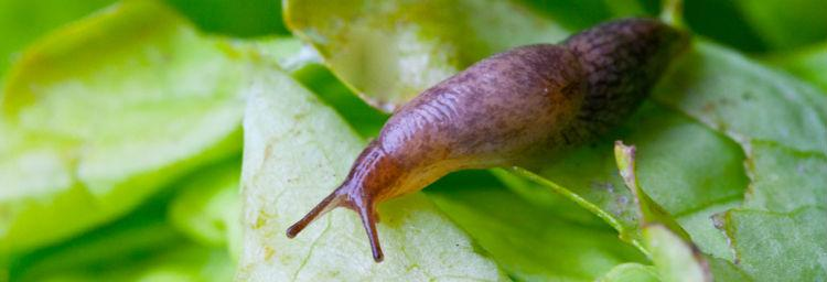 pests and diseases image